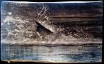 Cerf à l'eau2
