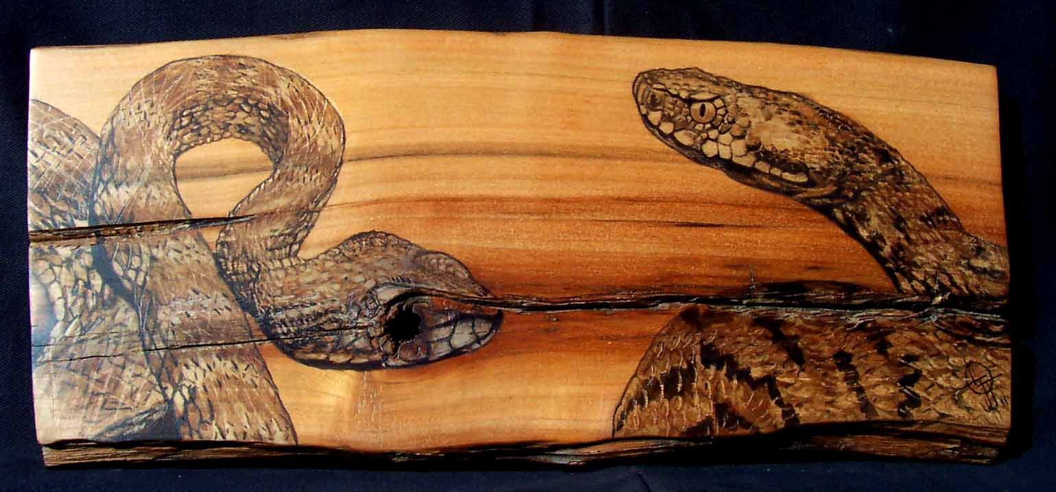 Peintures animali res brou b tes bois - Peinture effet serpent ...